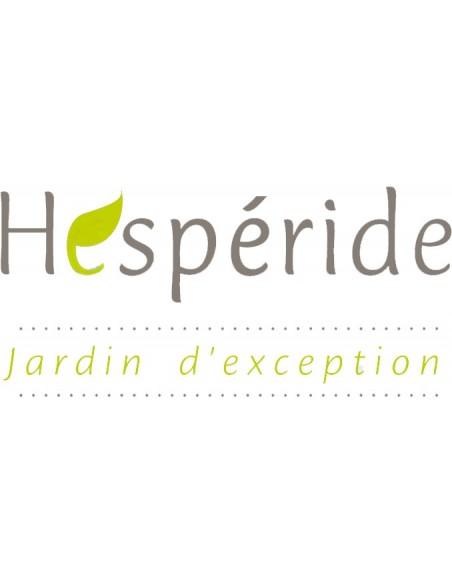 Tonnelle de Jardin Santorini en Acier époxy 3 x 4 m - Ardoise- Hespéride