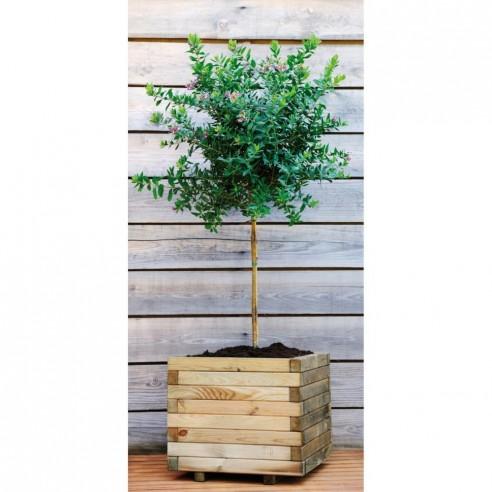 Bac carré Stockholm en bois traité de 80x80 cm