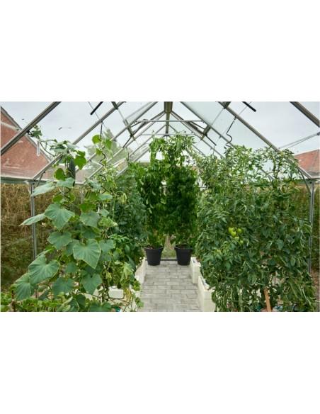 Serre Popular HALLS 5 m² laquée verte - Verre horticole de 3 mm